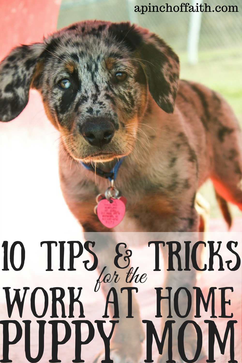 10 Tips and Tricks for the WorkAtHome Puppy Mom
