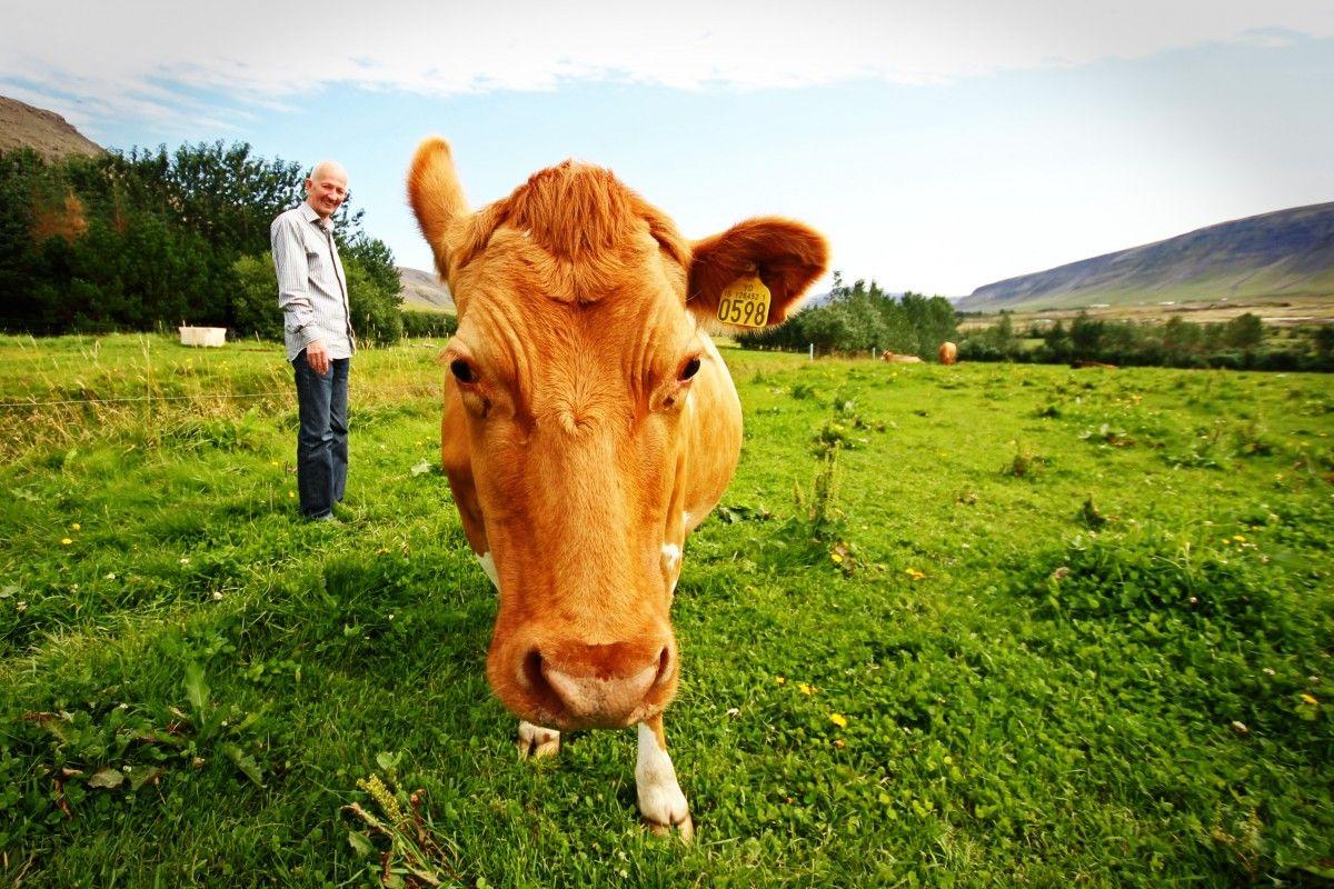 Free Images grass, field, farm, meadow, prairie, pasture