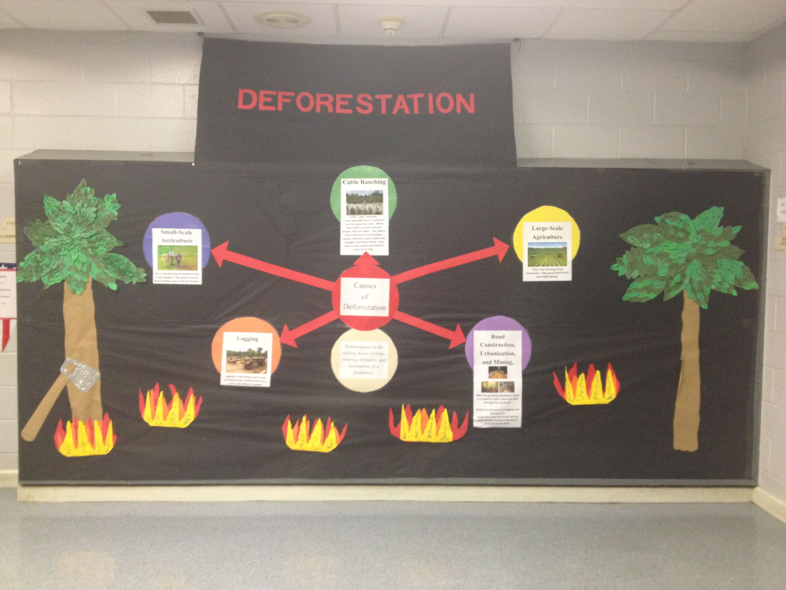 Amazon Rainforest Deforestation Display Created By My Ell Students