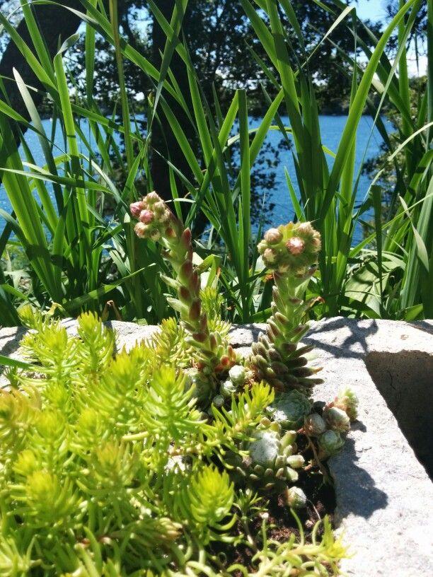 My cinderblock garden wall !
