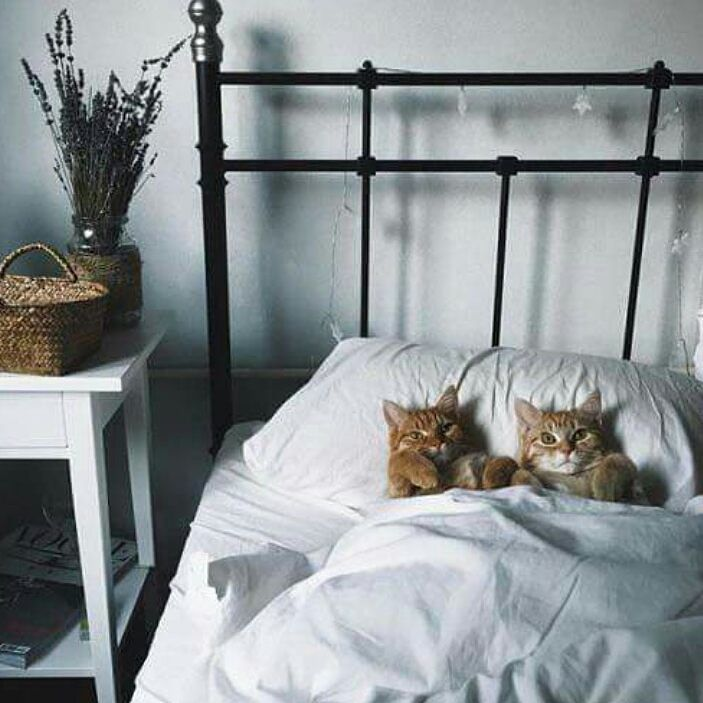 Zzzz -  ℓσνєℓу phσтσ  Good night - Use #copenhagenbohemeinspo  to get posted #sleeptight #bomdia #goodnight #notmycat #cats #inbed #inspoforallgirls #inspo #funny #world #animal #bedroom #interior #vakreverden #interiørmagasinet #bobedredk #vakrehjemoginteriør #boligpluss #blogger by copenhagenboheme