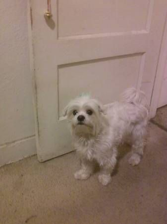 Lost Little White Dog Around Glassel Park Eagle Rock My Name Is Damian I Went Missing Around New Years Eve Or Day I Losing A Dog White Dogs Police Canine