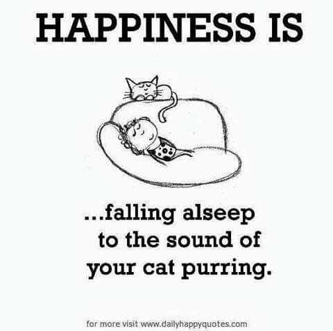Happiness Is Falling Asleep To The Sound Of Your Cat Purring Cat Quotes Crazy Cats Cat Love