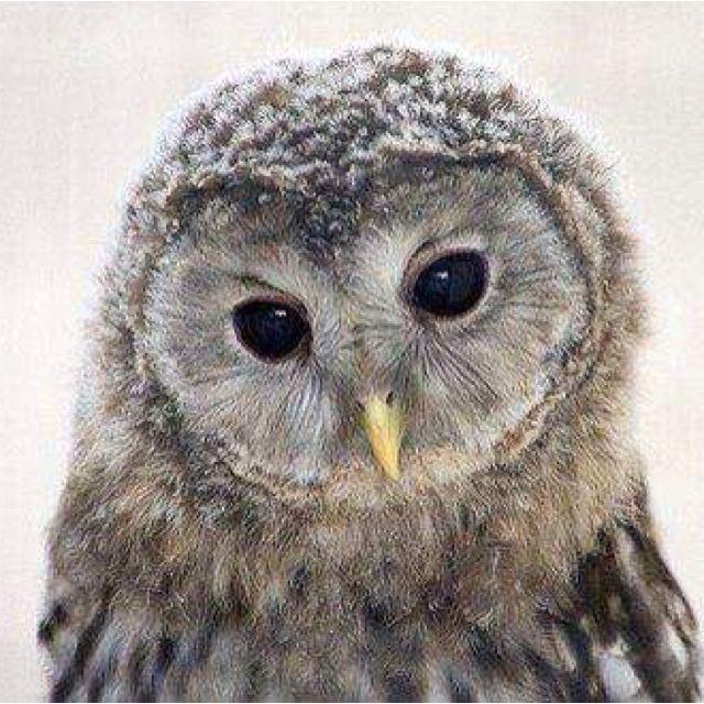 Little owlet ♥