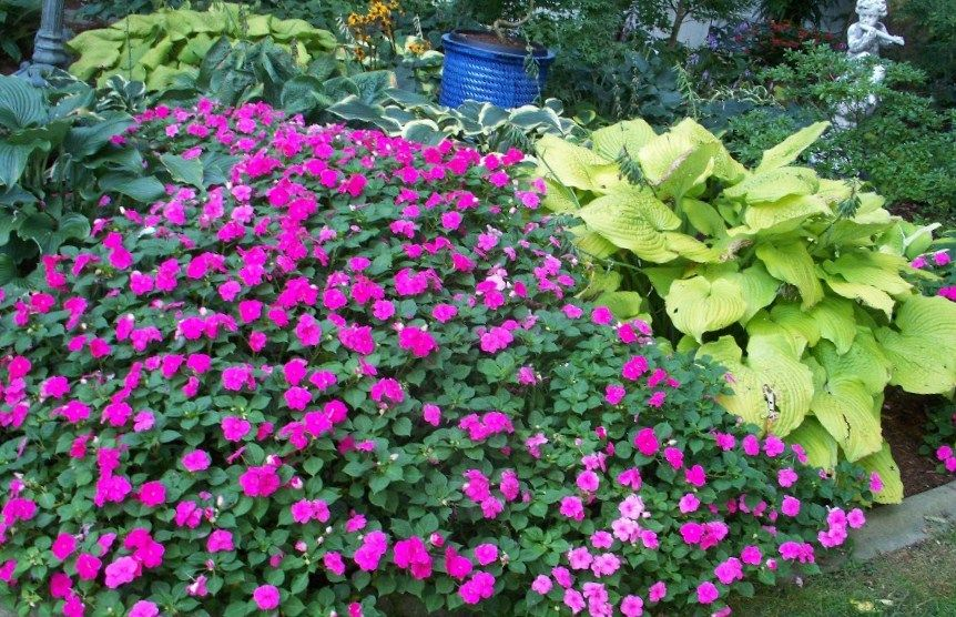 garden ideas for shaded areas impatiens and hostas - Vegetable Garden Ideas For Shaded Areas
