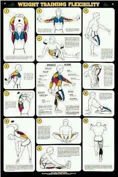 estiramiento  flexibility workout stretches for