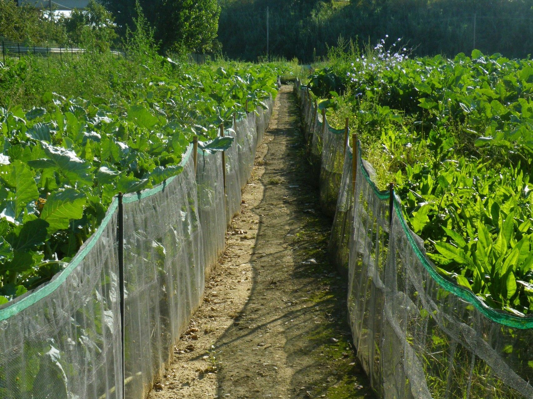 Pin On Wild Life Backyard farming in nigeria