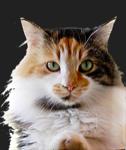 Cat Food/Supp