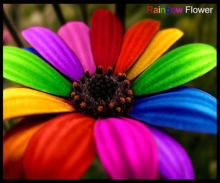Marguerite Multicolore Fond Ecran Gratuit De Toutes Les Couleurs Multicolore