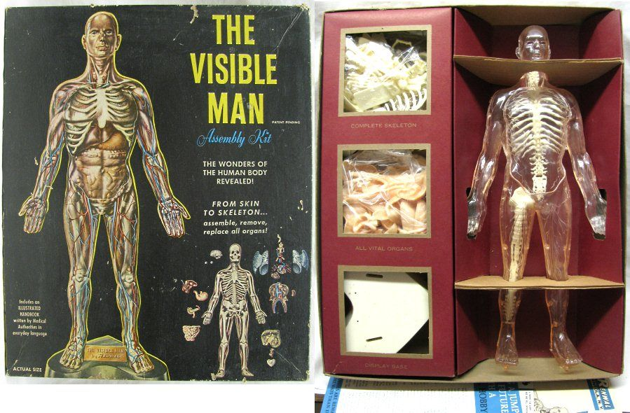 Renwal 15 The Visible Man 800 598 Plastic Model Kit Toys Of The