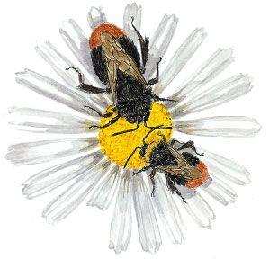 Bijen maken