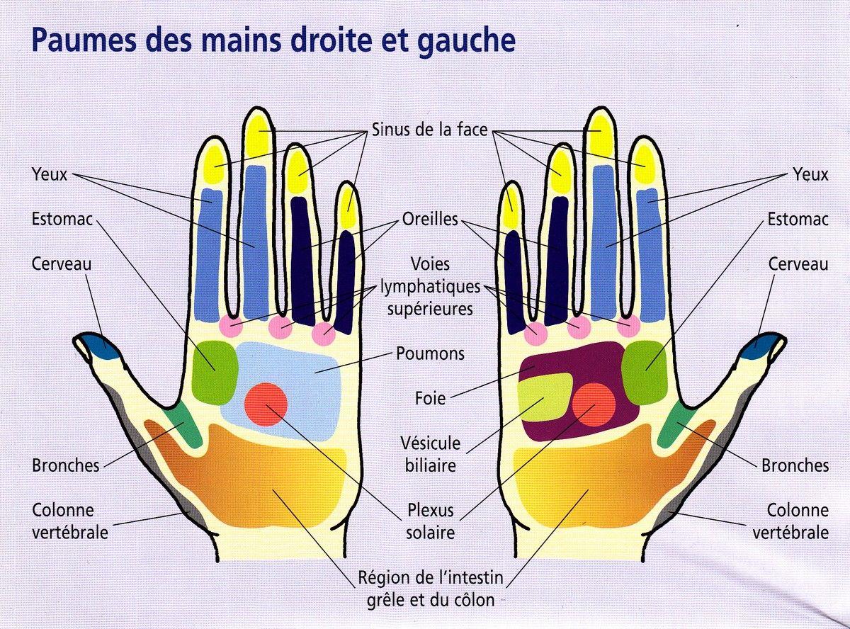Favori Tout est dans la paume de votre main: appuyez sur ces points pour  DL67