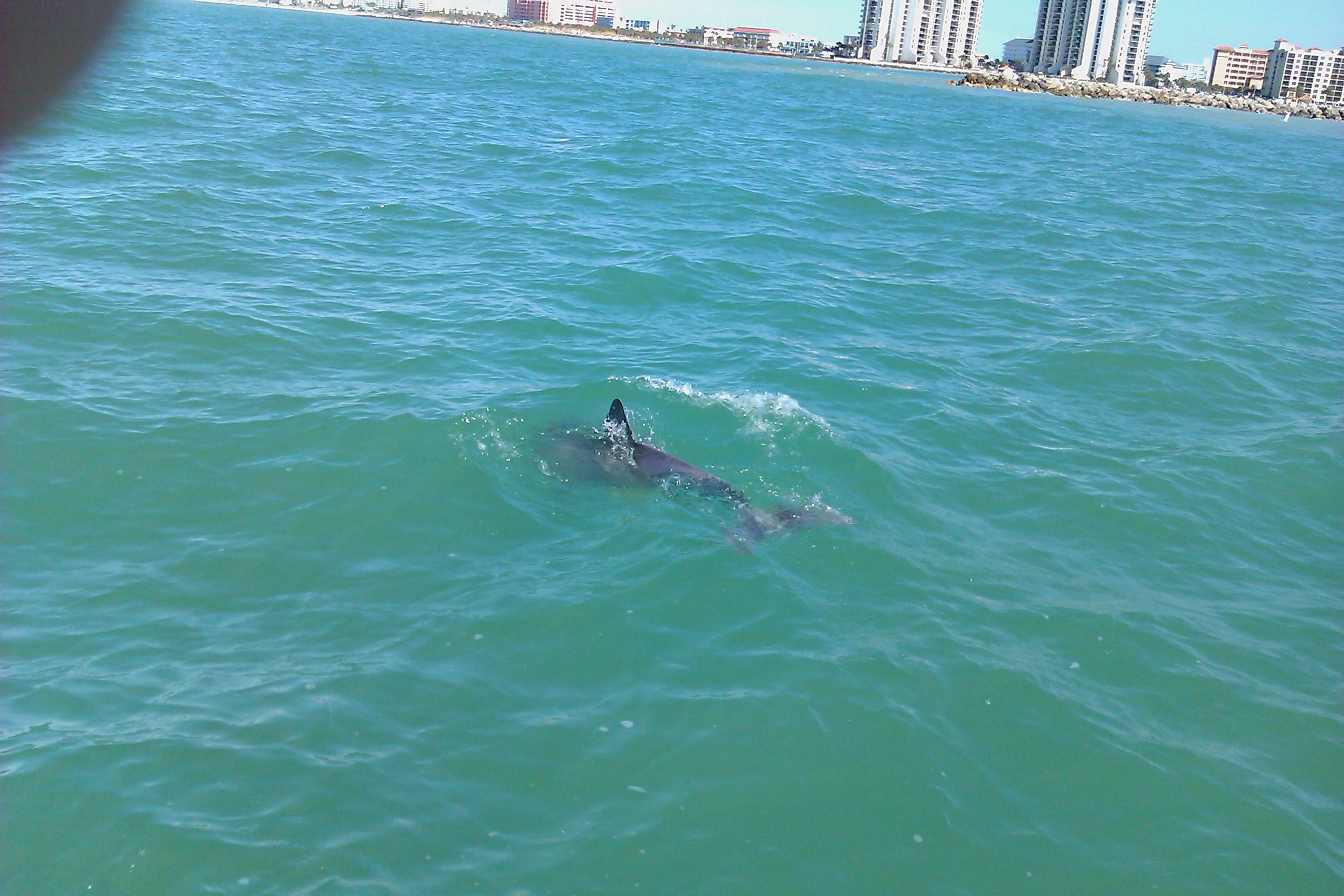 Clearwater dolphin watch