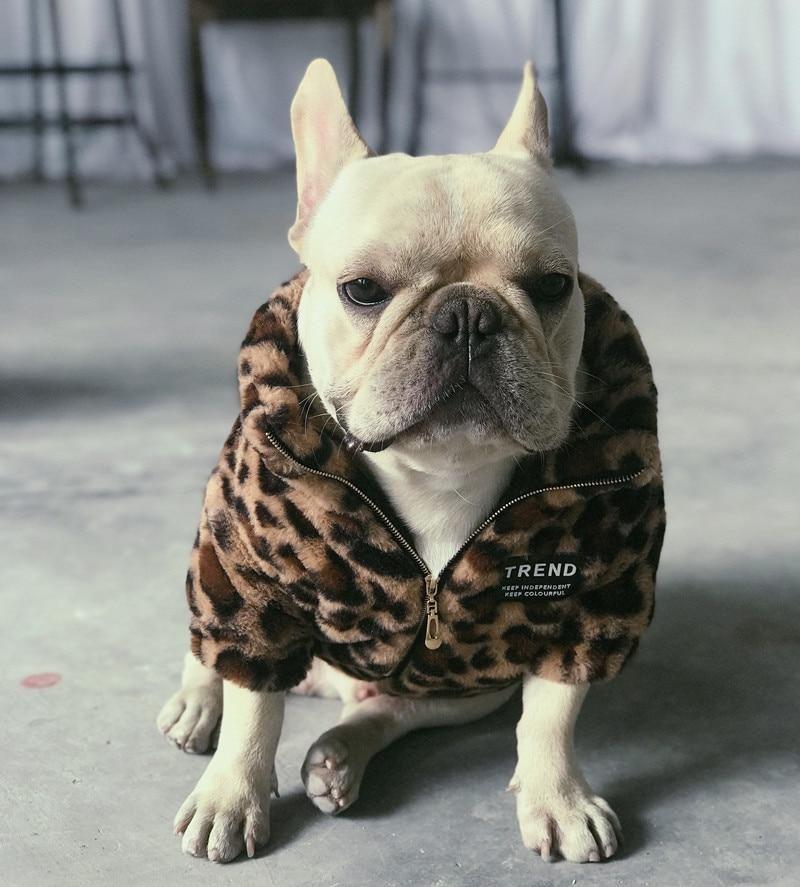 Luxury Leopard French Bulldog Coat Dog Breeds Bulldog Bulldog