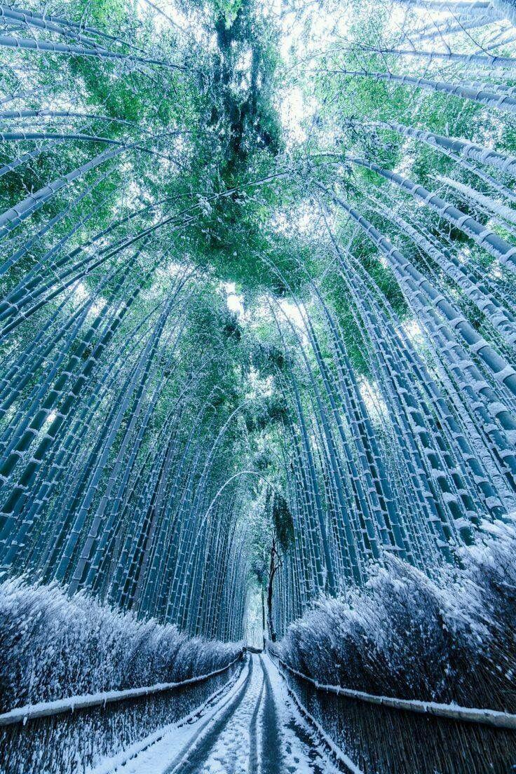 arashiyama bamboo grove winter nippon pinterest