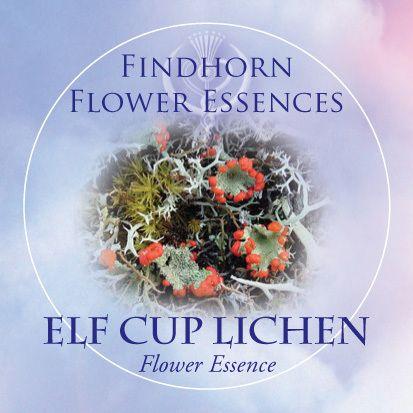 Elf Cup Lichen - Findhorn Flower Essences | http://www.findhornessences.com/