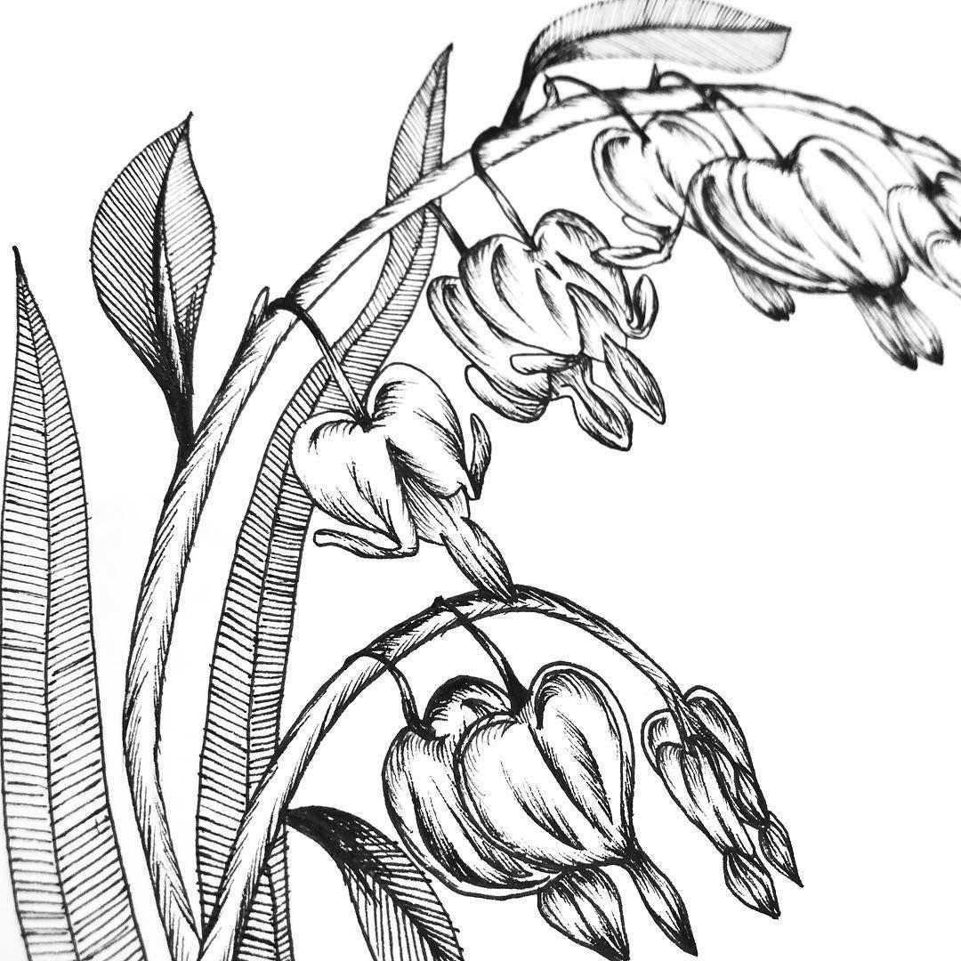 Bleeding Hearts details ️ floralsyourway Bleeding