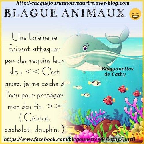 Blague Sur Le Theme Animaux Animaux Blague Animaux Et Humour