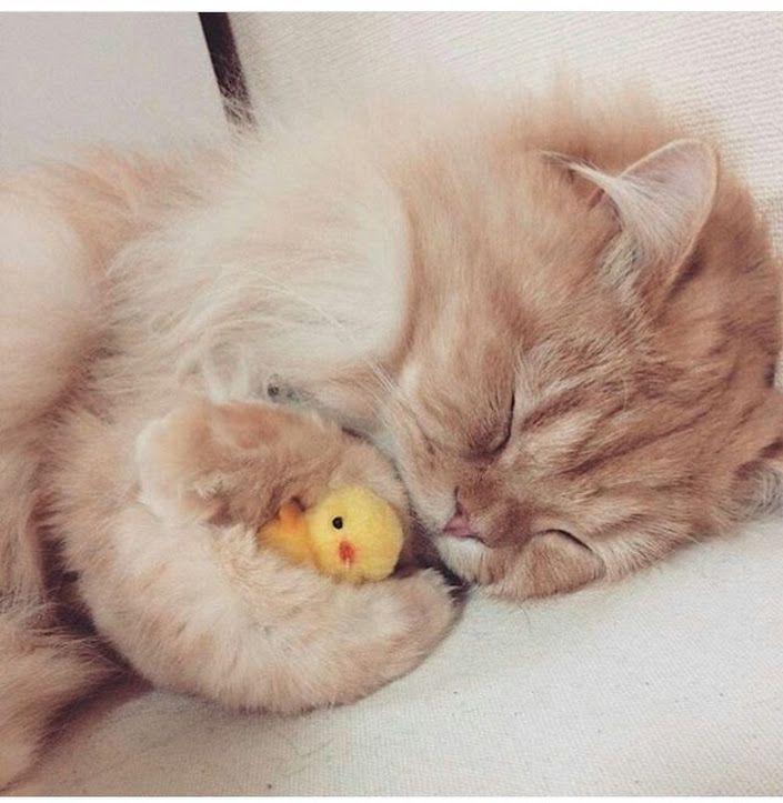Sladkij Son Kittens Cutest Cutest Kittens Ever Cat Sleeping