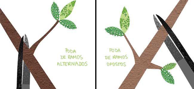 Como Cultivar Como Podar Rosas Poda De Rosas Pinterest Garden