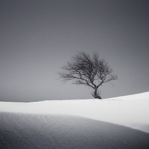Winter is coming. Photo by Liam Frankland. #gapsnap #winter #snow #cold #tree #travel #traveling #travelling #travelgram #travelphotography #instatravel #backpacking #gapyear