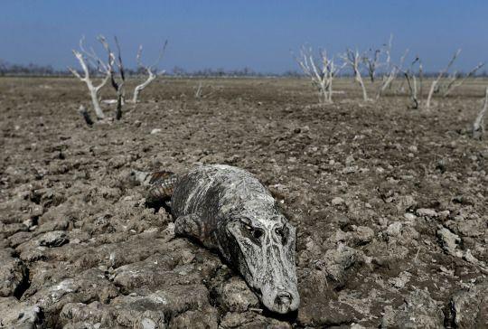 Yahoo News Photos Perdida De Biodiversidad Cambio Climatico Hábitat Natural