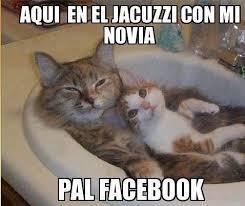 Gatos Memes Gatos Chistes Gatos Risa Gatos Risa Meme