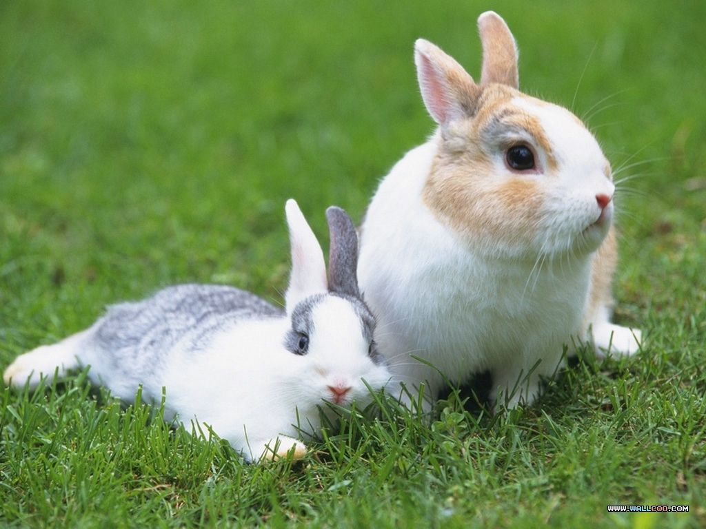 Herbivorous Animals - Google Search