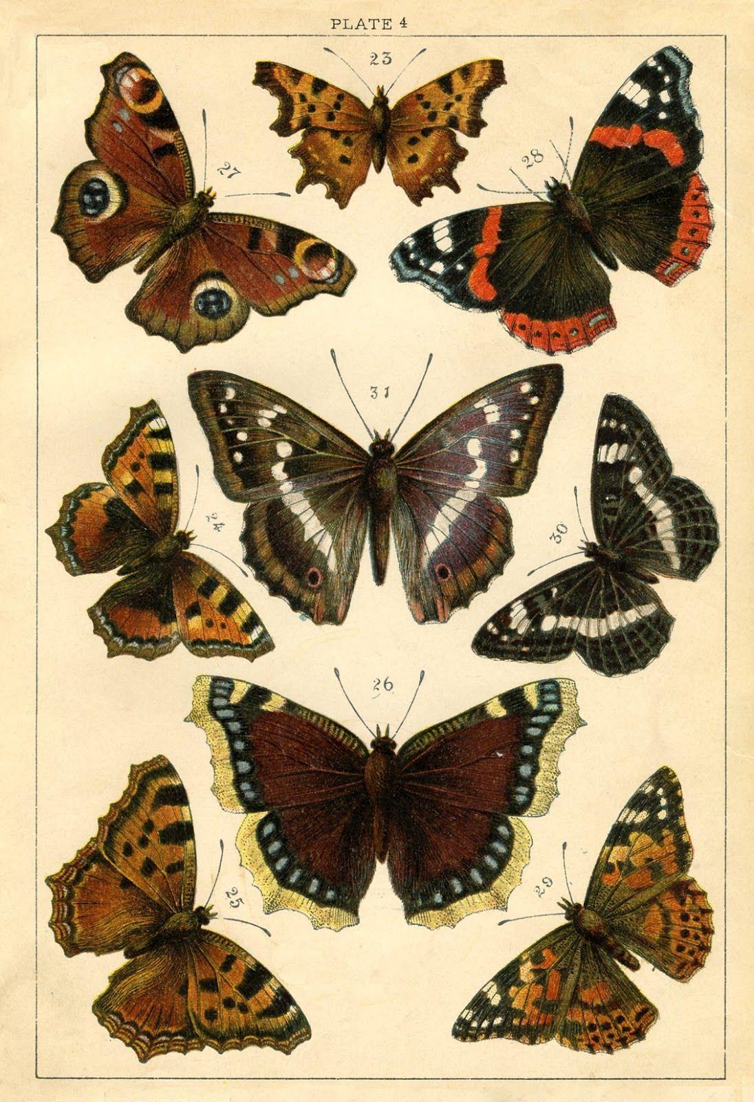 Pin Uzivatele Zdenka Ctvrteckova Na Nastence Motyl Butterfly