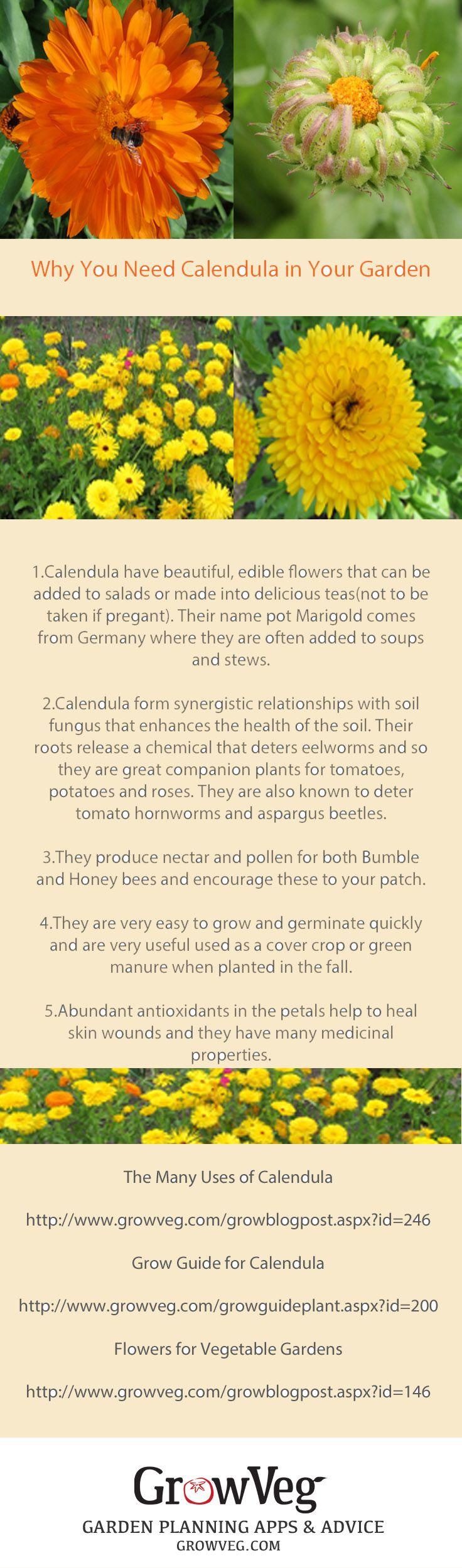 Fantastic Companion Plant Many Medicinal Properties And 400 x 300