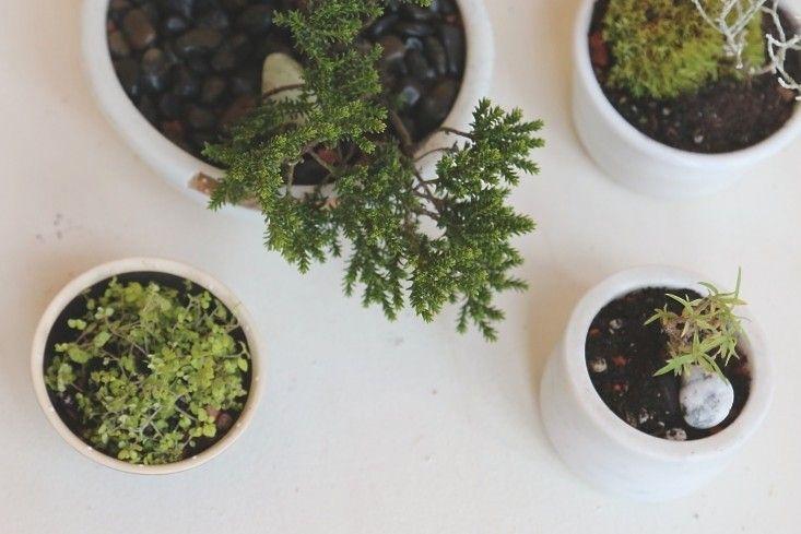 Best Household Plants