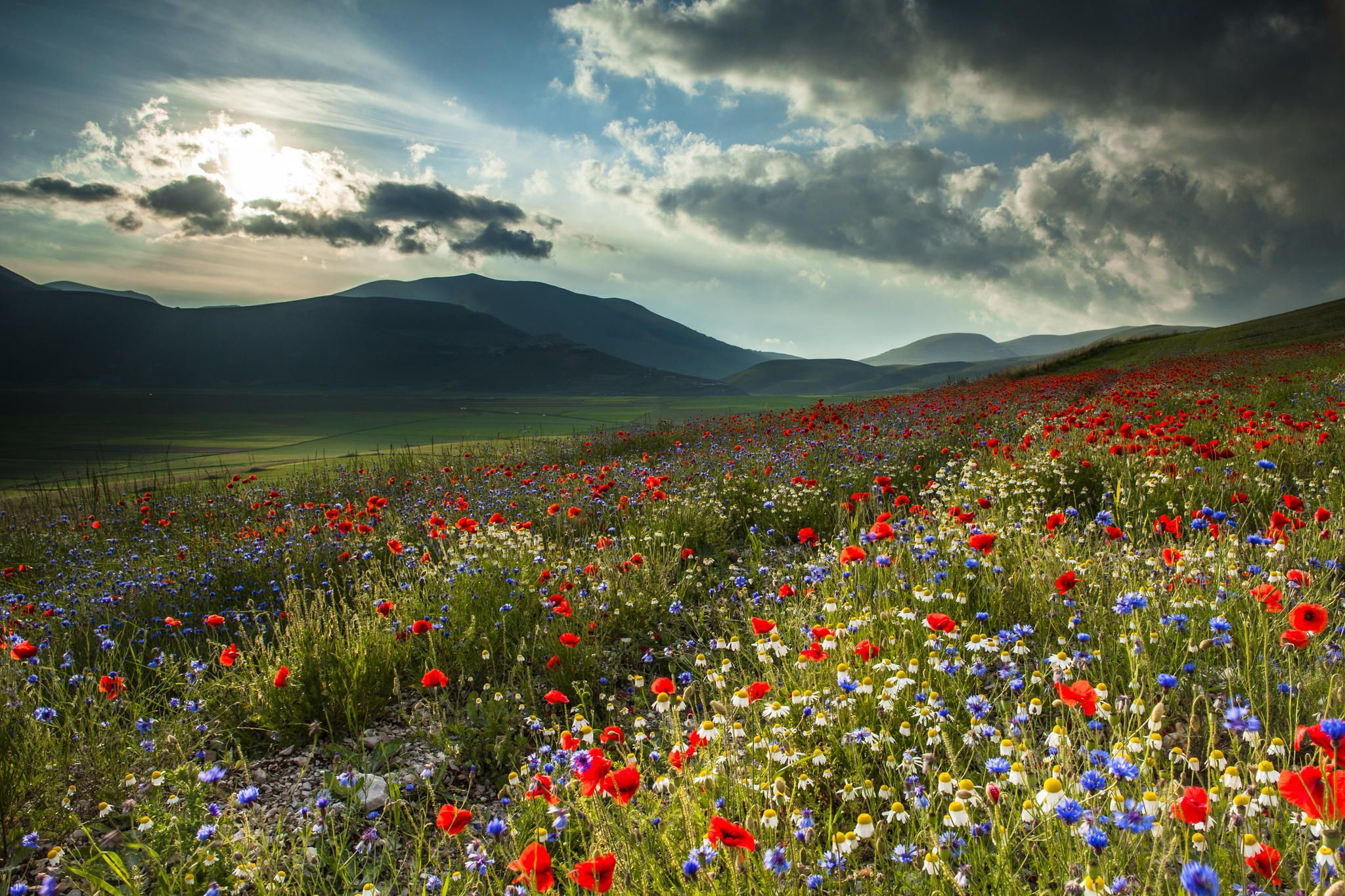 Wildflowers in Castelluccio, Umbria, in the Apennine Mountains of central Italy ~ Massimo Tommi