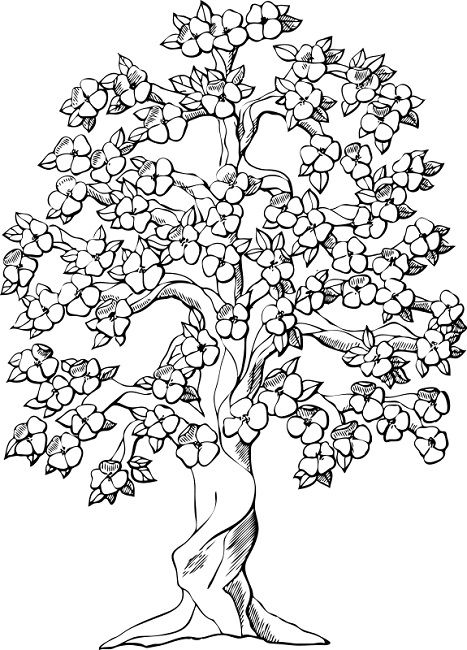 Coloring Pages Of Spring Trees Tree Coloring Page Tree Drawing