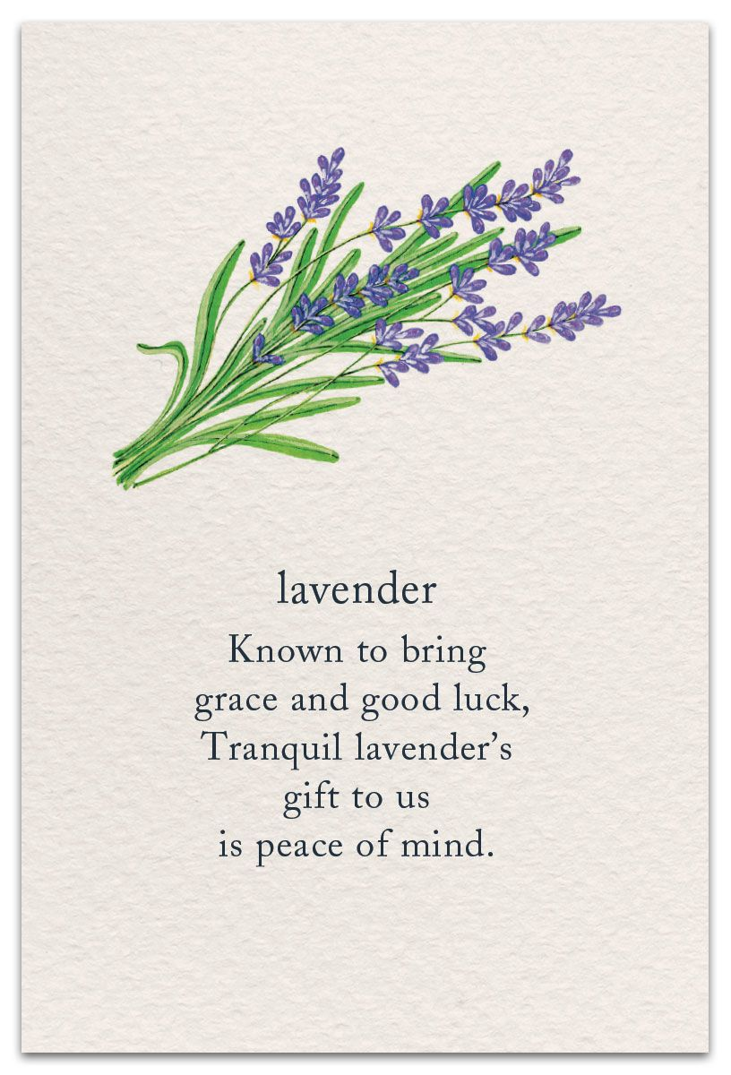 Lavender Support Encouragement Card Cardthartic Com Flower Quotes Flower Meanings Garden Quotes