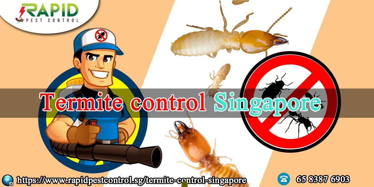 Home Termite control, Pest control services, Pest control