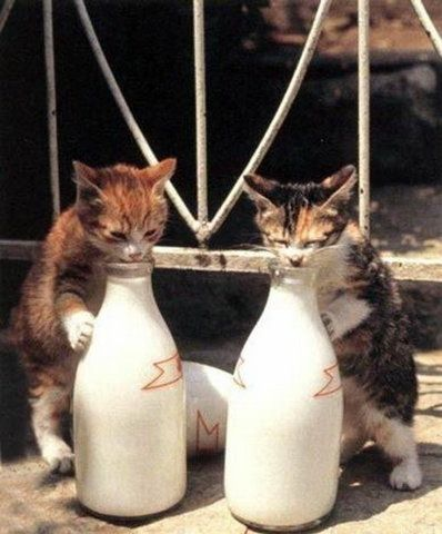 What Can Be Better Than Milk Kittens Crazy Cats Cats And Kittens