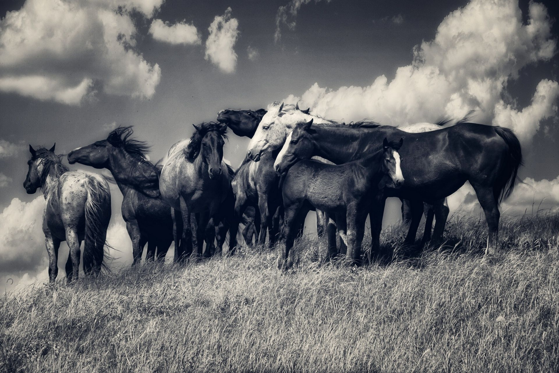 Great Wallpaper Horse Photography - b3701900780d251307b41d005769a2f4  Perfect Image Reference_419392.jpg