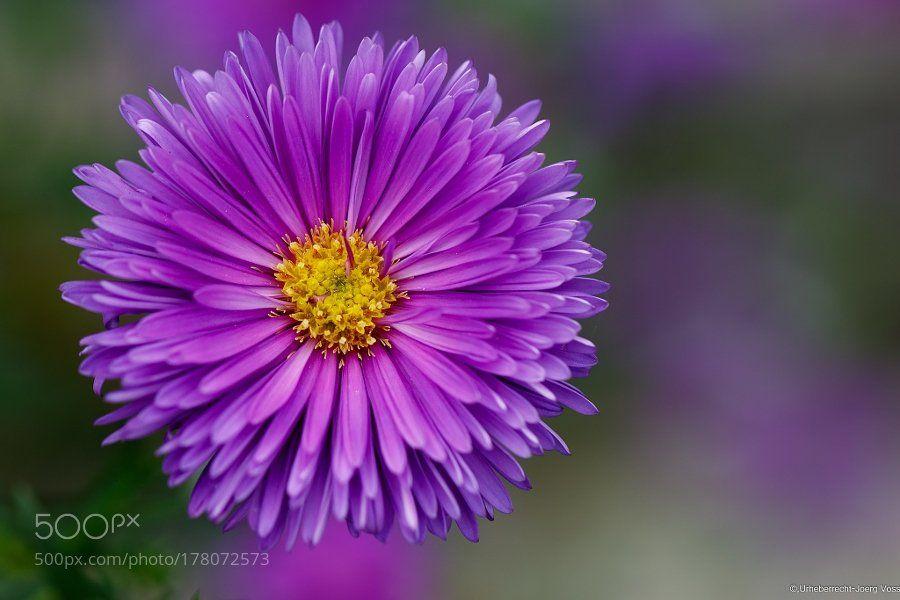 #photography Rocking Violet by vossderj https://t.co/6kJjDA1XPR #followme #photography