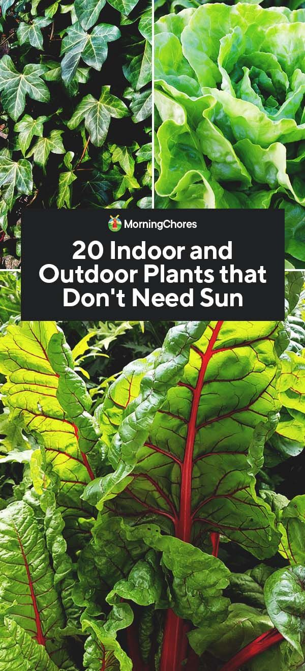 20 Indoor and Outdoor Plants that Don't Need Sun -   16 plants House sun ideas