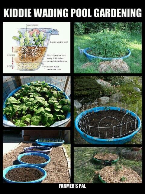 Kiddie Pool Gardening