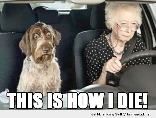 This Is How I Die Funny Dog Pictures Funny Dogs Funny Animal Pictures