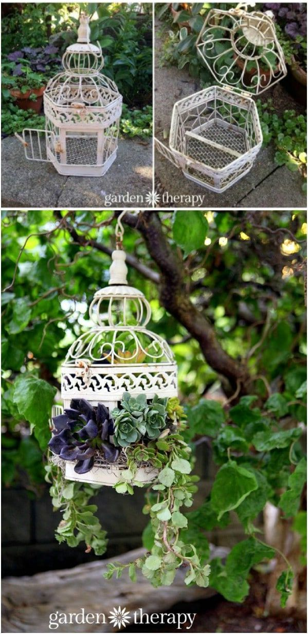 30 Captivating Backyard Succulent Gardens You Can Easily DIY  Curated and Created by Team