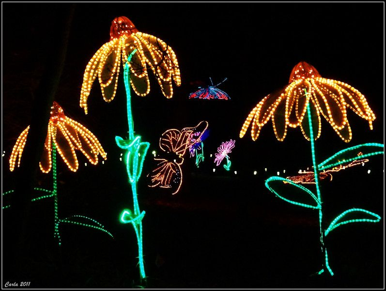 b3715413e453fa69327278a0ac331062 - Garvan Gardens Hot Springs Christmas Lights