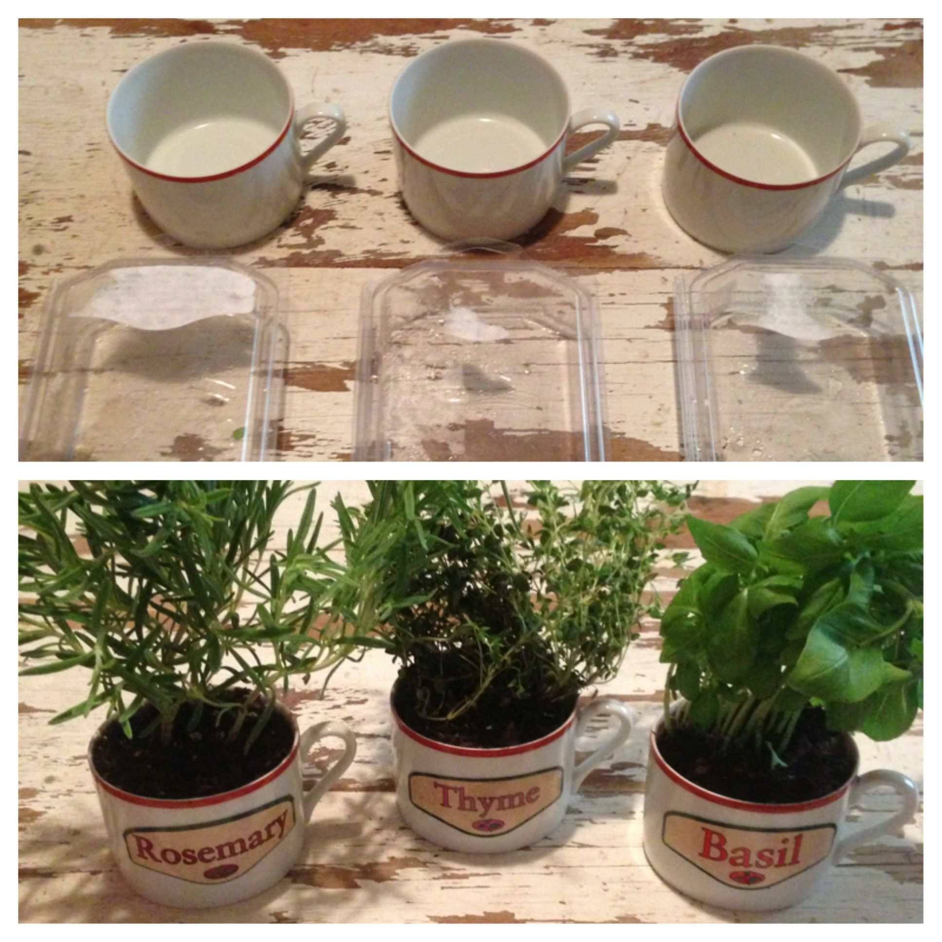 All you need is three coffee mugs and three herbs with labels on box.