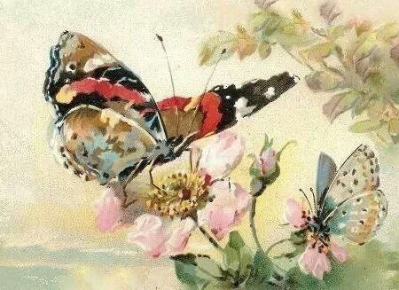 Rozen, vlinders
