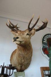 Exotic Game Deer Head