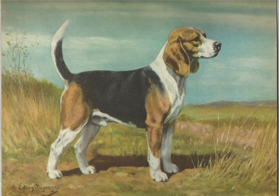 Use Coupon Code Pinterest To Save 10 Off Of Your Purchase Beagle