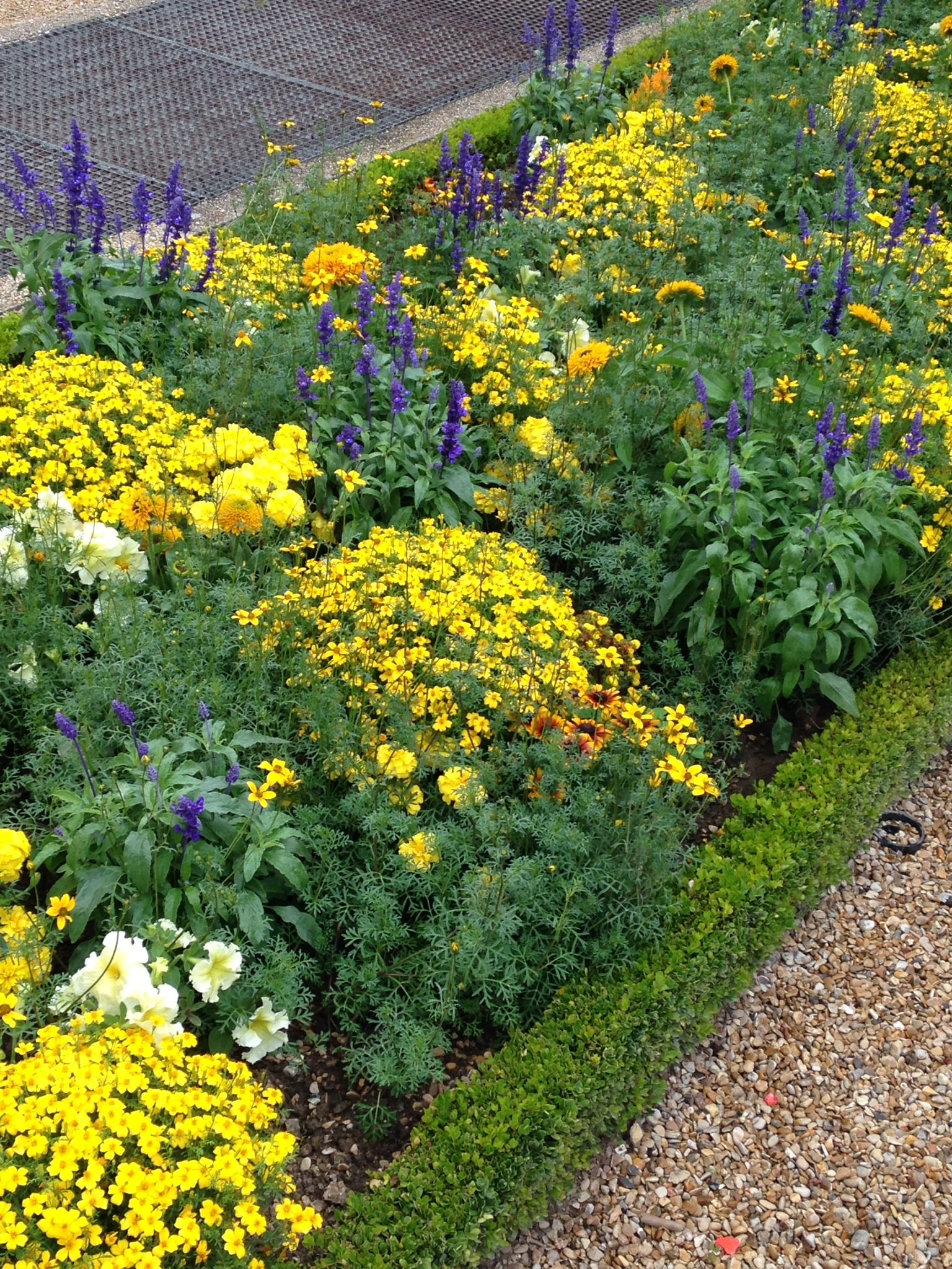 Luxembourg Gardens Perfect Combination Of Easy To Grow Plants Marigolds,