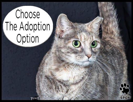 Today Through Sunday July 7th You Can Adopt A Cat Or Kitten For