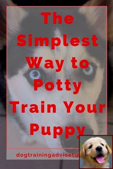 House Training A Puppy At Night and Dog Training Classes